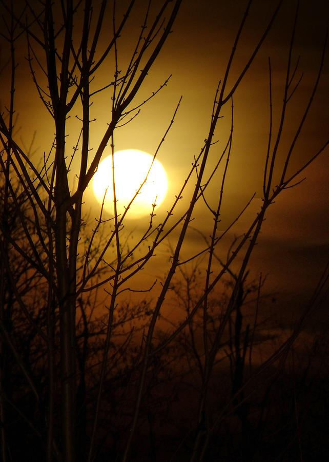 Fall Photograph - Moon I by Sarah Boyd