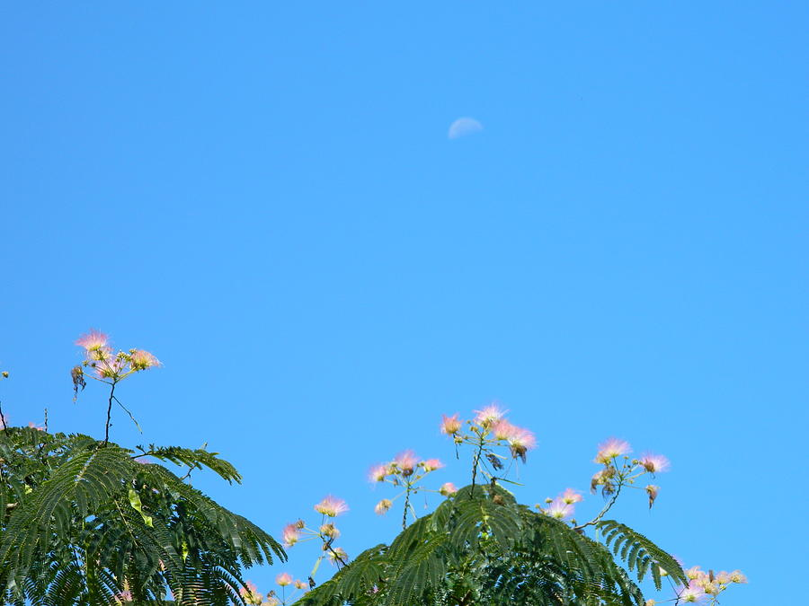 Moon Photograph - Moon In The Day by Linda Brown