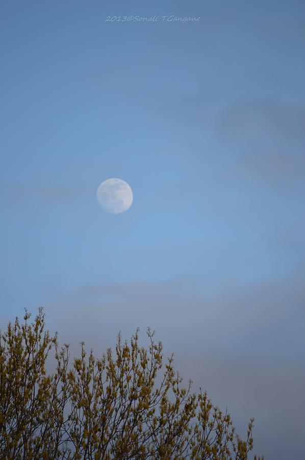 Through The Trees Photograph - Moon Lording Over Sky by Sonali Gangane