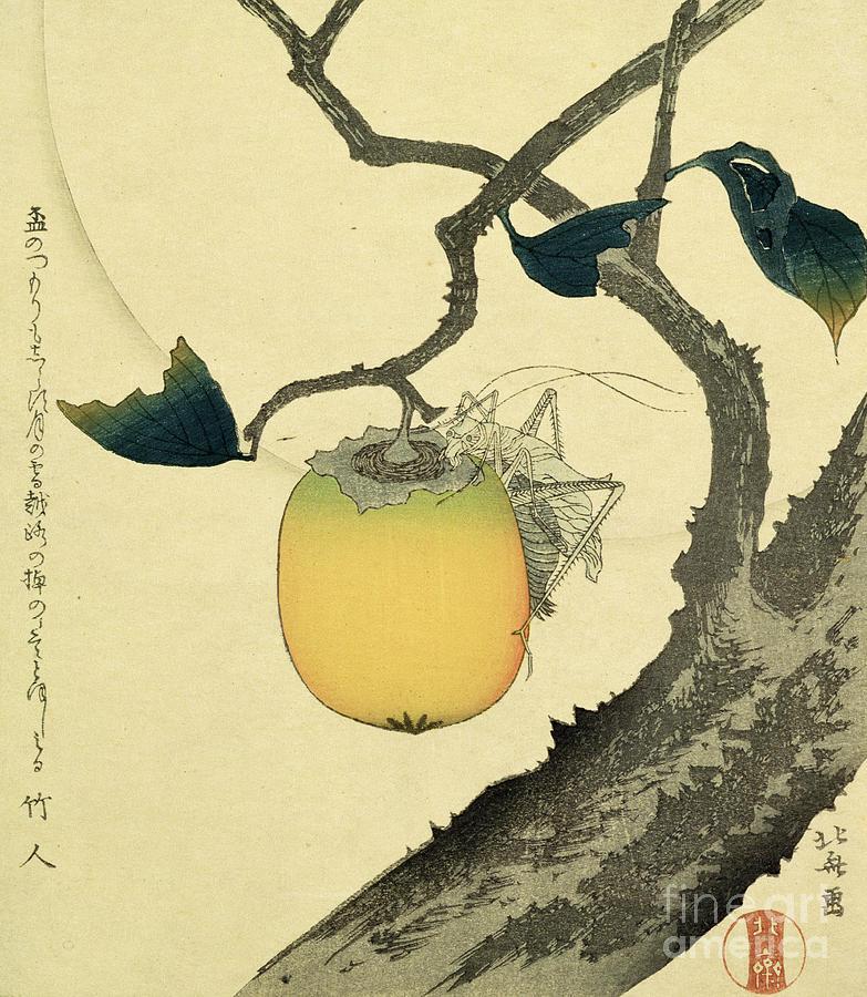 Japanese Drawing - Moon Persimmon And Grasshopper by Katsushika Hokusai