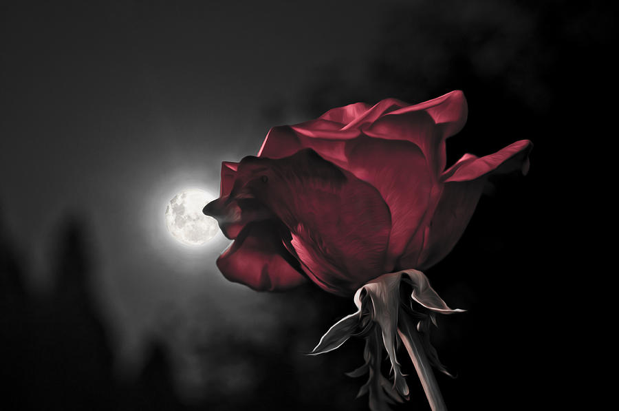HD wallpapers iphone 5 red rose wallpaper