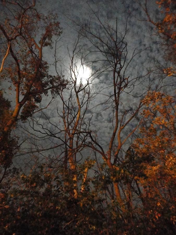 Moon Photograph - Moon Shiner by Guy Ricketts