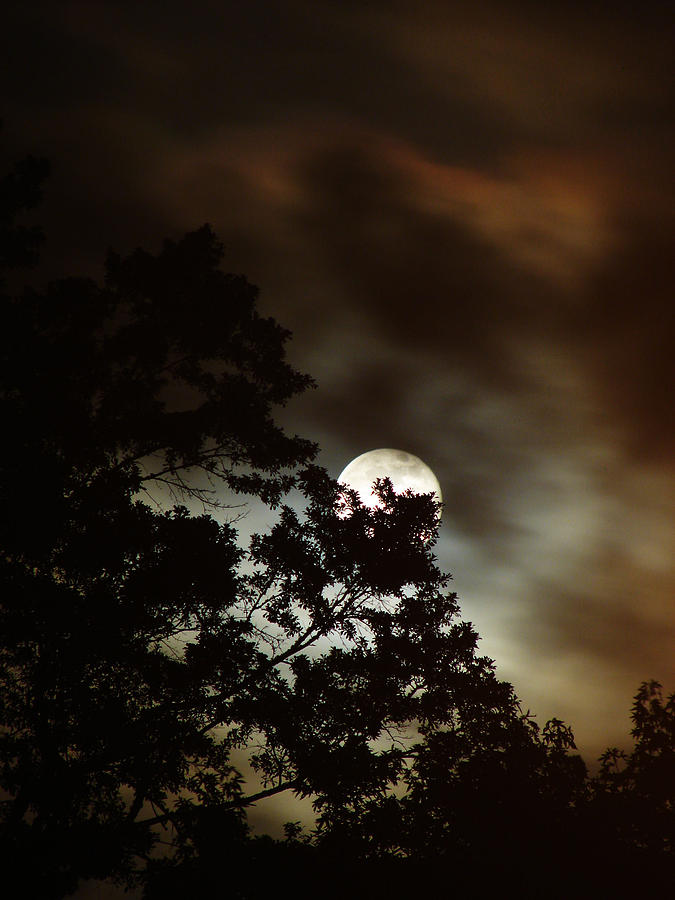 Photography Photograph - Moon Show by Ella Char