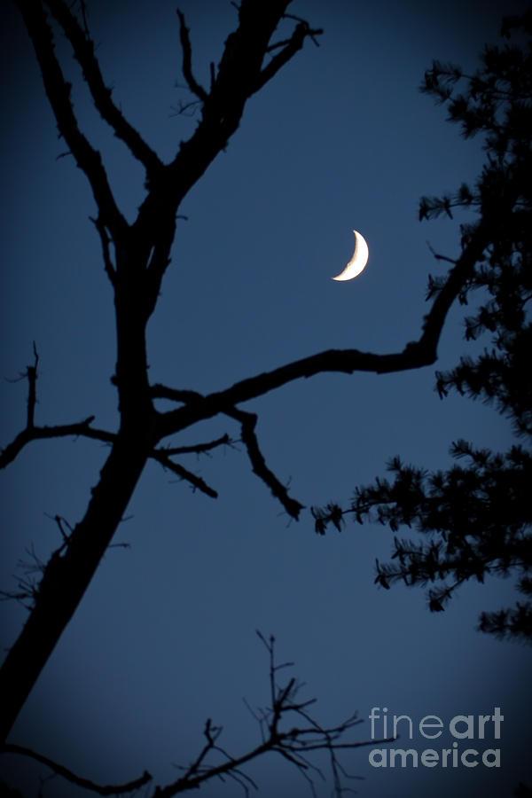 Moon Photograph - Moon by Wayne Valler