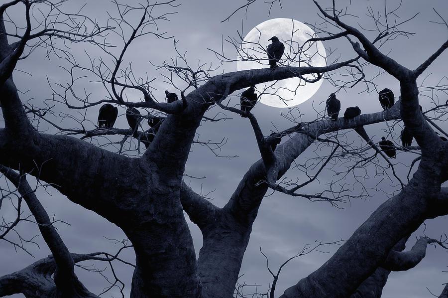 Tree Photograph - Moon Whisperer II by Edwin Verin