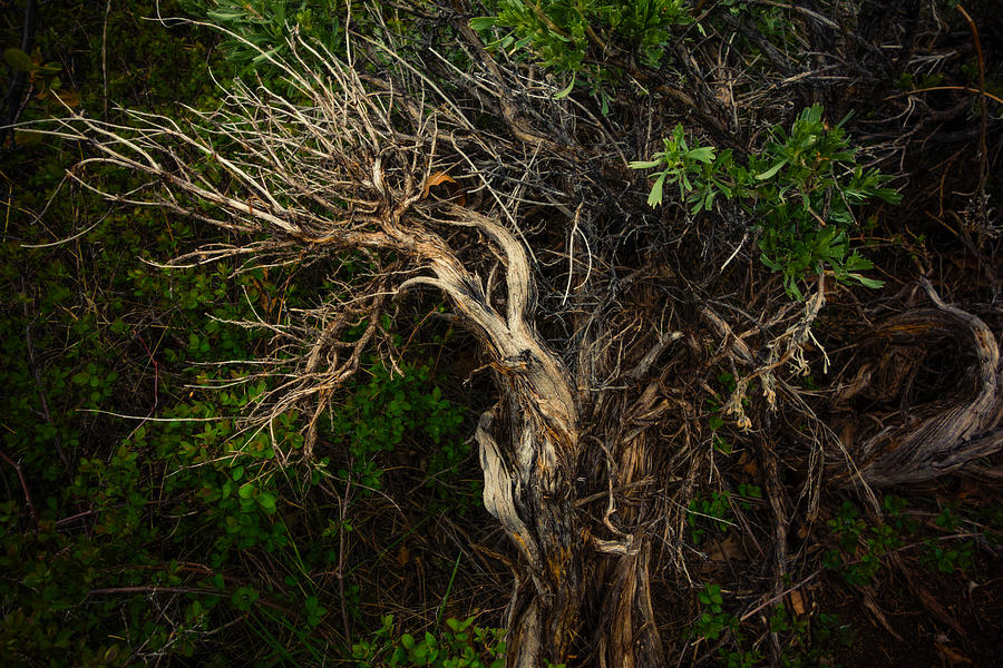 Tree Photograph - Moondance by Roger Chenery