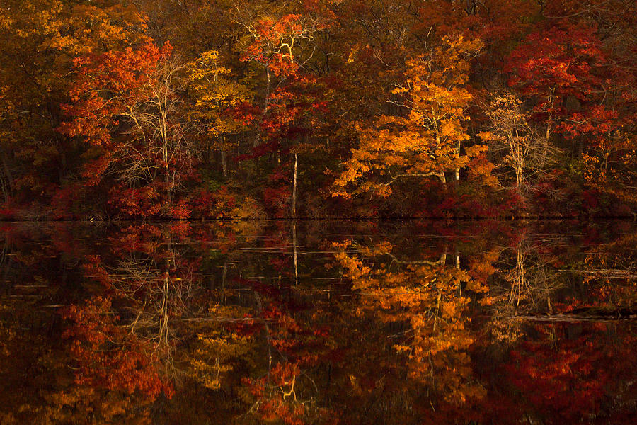 Moonlight Photograph - Moonlight Autumn by Jonathan Steele