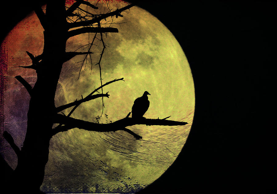 Vulture Photograph - Moonlight Mile by Bill Cannon