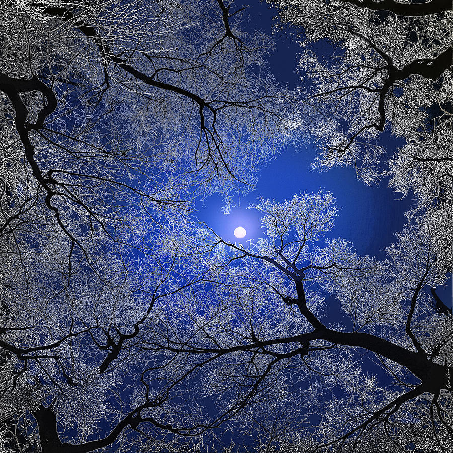 Branches Digital Art - Moonlight Trees by Igor Zenin