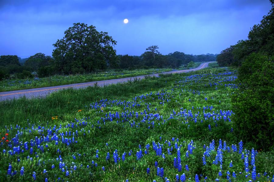 2012 Photograph - Moonlit Bluebonnets by Tom Weisbrook