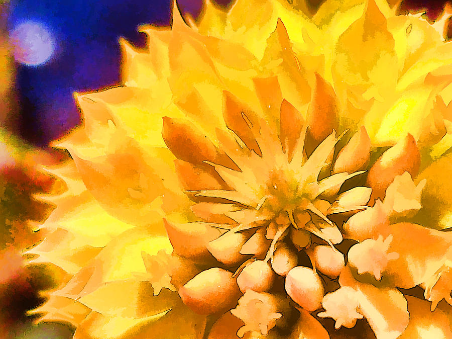 Flower Photograph - Moonlit Yellow Flower by Beth Sawickie