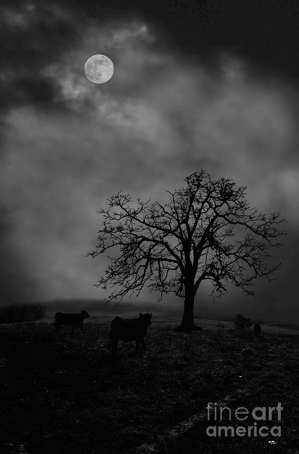 Moon Photograph - Moonlite Tree On The Farm by Dan Friend