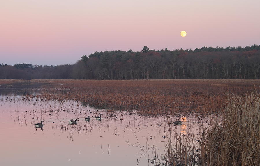 Moon Photograph - Moonrise Over Waterfowl Pond by John Burk