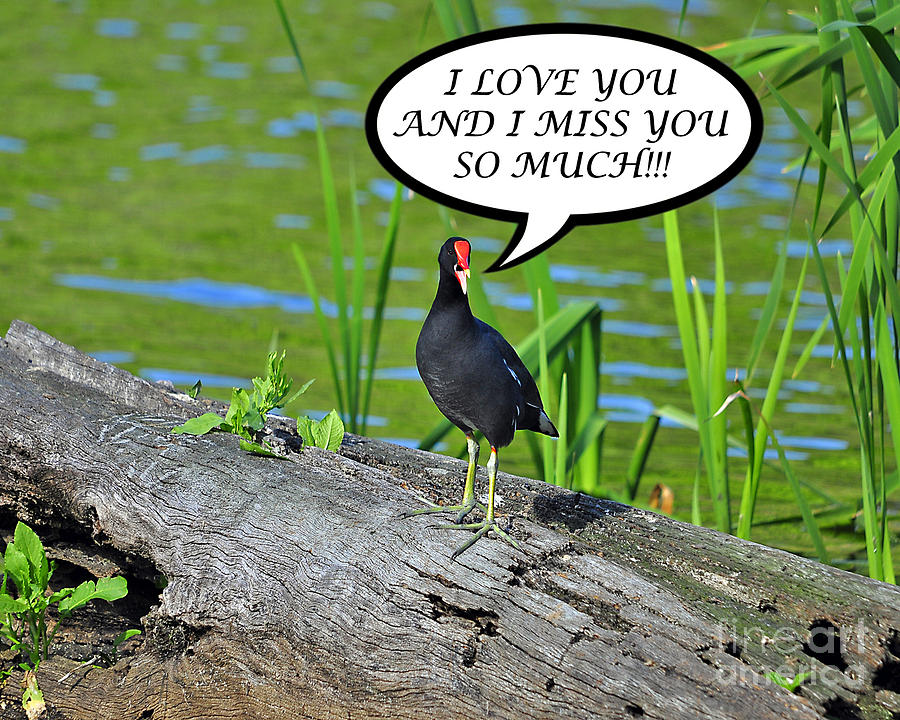 Greeting Card Photograph - Moorhen Miss You Card by Al Powell Photography USA