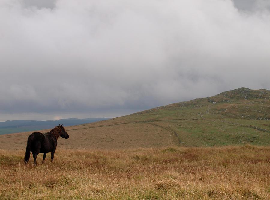 Moorland Pony, Davidstow, Bodmin Moor Photograph by Nik Taylor