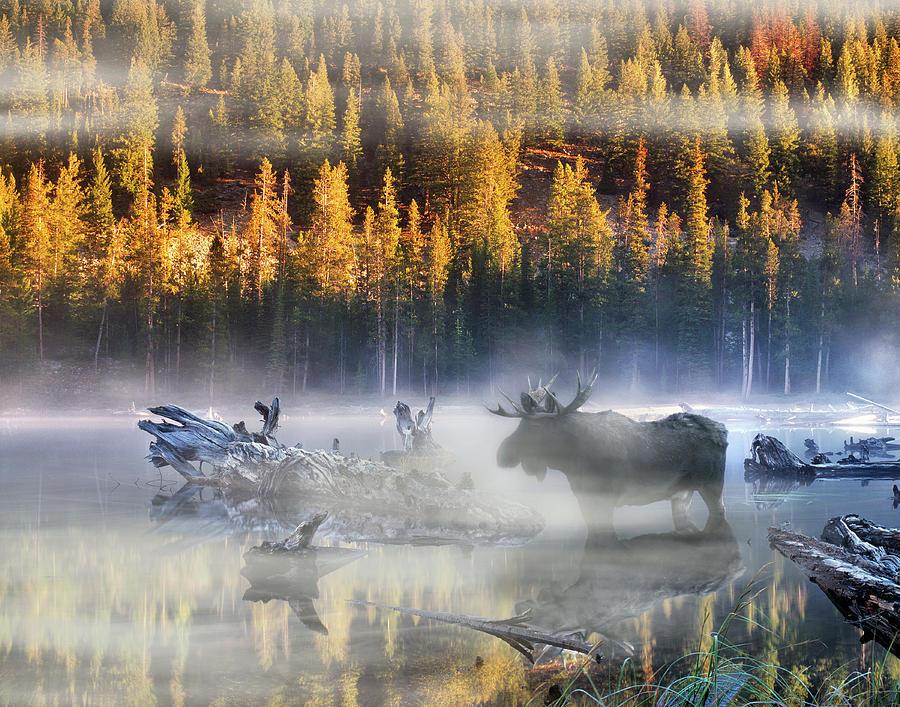 Nature Photograph - Moose Lake by Leland D Howard