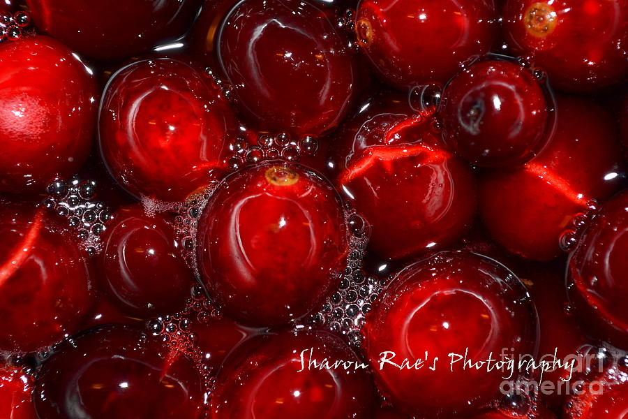 Berries Photograph - More Berries To You by Sharon Farris
