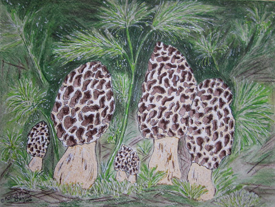 Morel Painting - Morel Mushrooms by Kathy Marrs Chandler