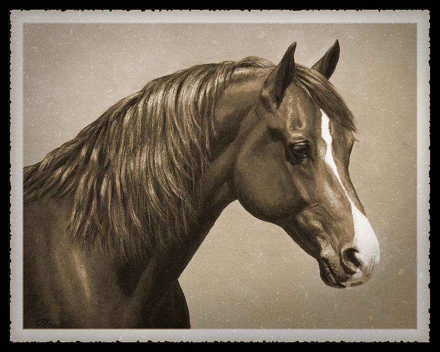 Horse Painting - Morgan Horse Old Photo Fx by Crista Forest