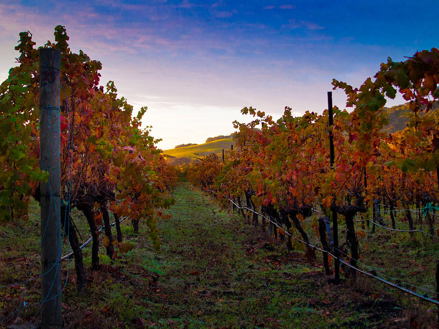 Nature Photograph - Morning At The Vineyard by Bill Gallagher