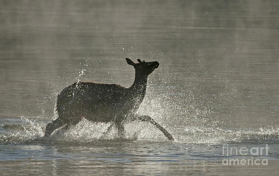 Nature Photograph - Morning Bath by Bob Dowling