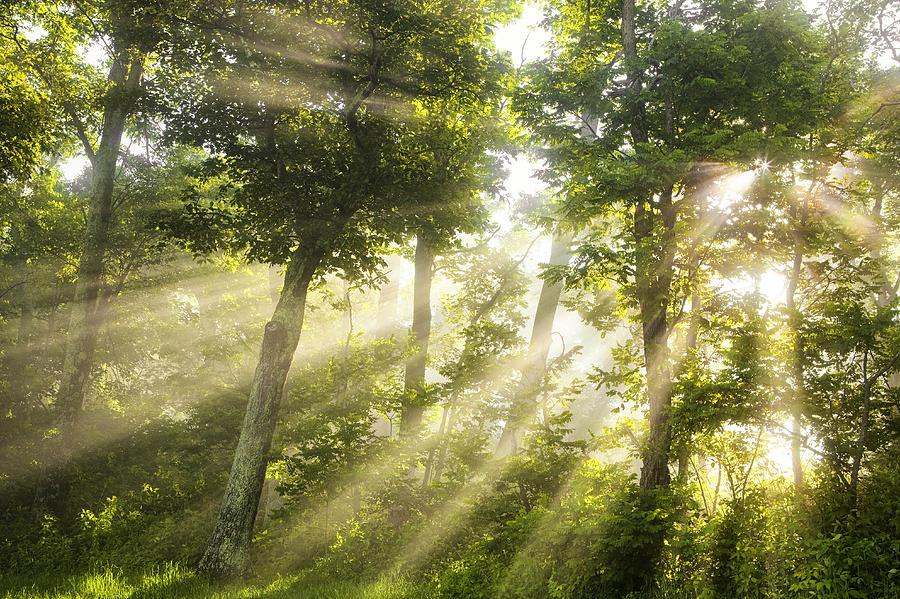 Light Photograph - Morning Bursting Forth by Andrew Soundarajan