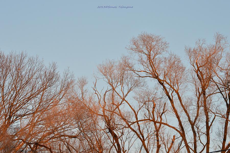 Fall Season Photograph - Morning Coloured In Fall by Sonali Gangane