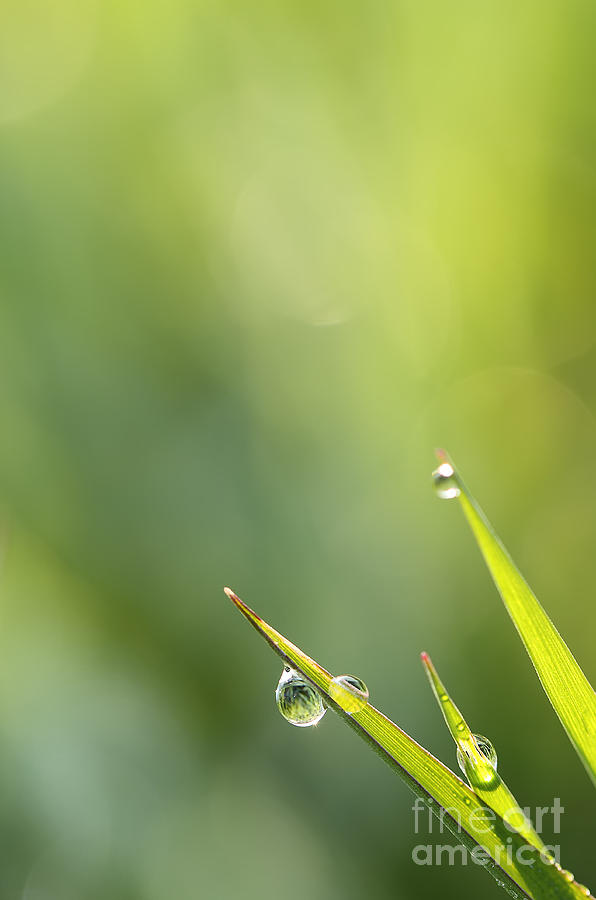 Drops Photograph - Morning Dew On Grass by LHJB Photography