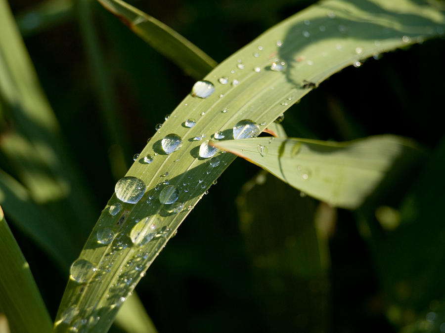 Morning Photograph - Morning Dew by Paige Sims