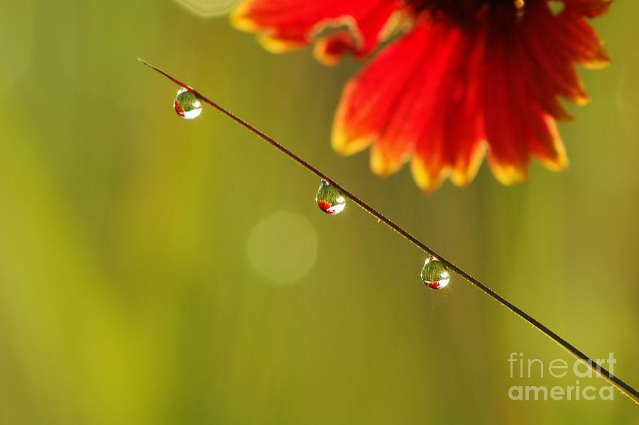 Morning Dew Photograph - Morning Dew by Patrick Shupert