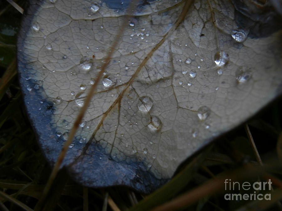 Macro Photography Photograph - Morning Dew by Steven Valkenberg