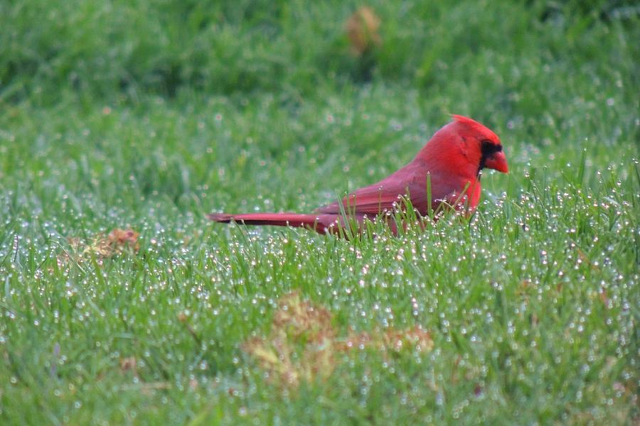 Birds Photograph - Morning Dew by Teresa Schomig
