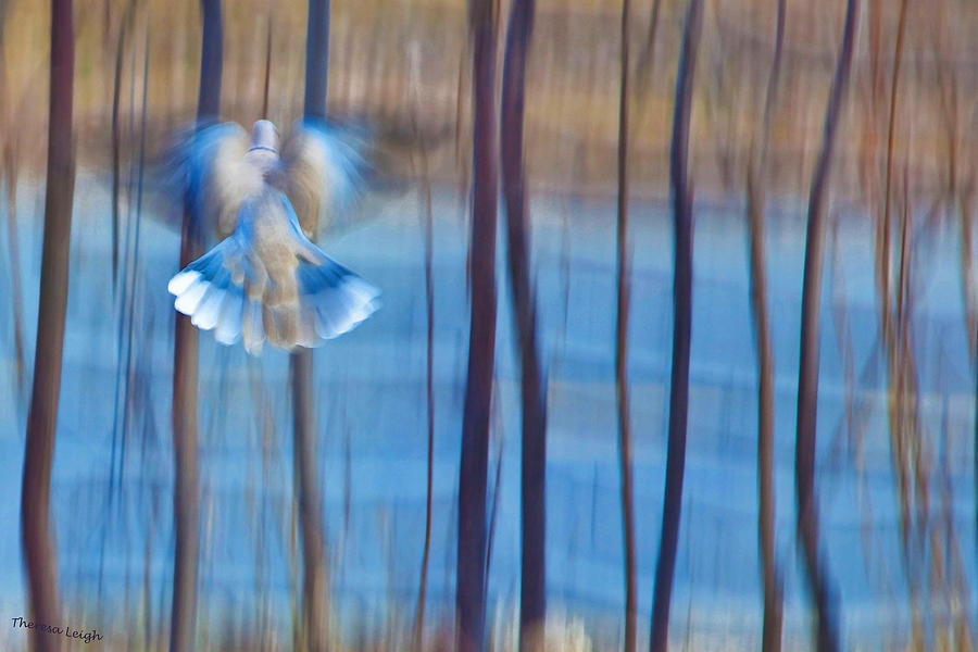 Poetry Photograph - Morning Dove by Theresa Tahara