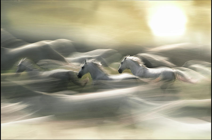 Horse Photograph - Morning Dream by Milan Malovrh