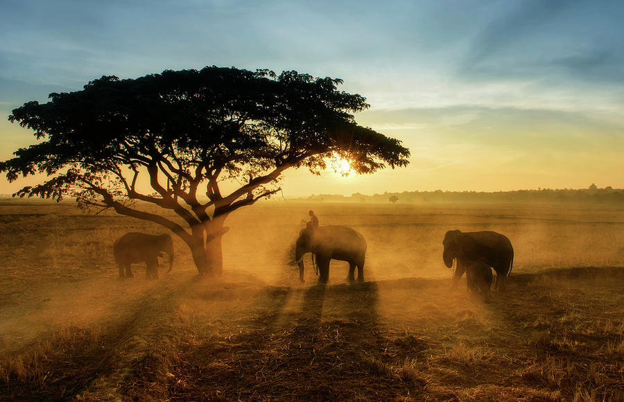 Elephant Photograph - Morning Elephant Home Town by Saravut  Whanset