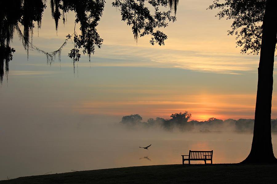 Fog Photograph - Morning Flight by Leslie Kirk