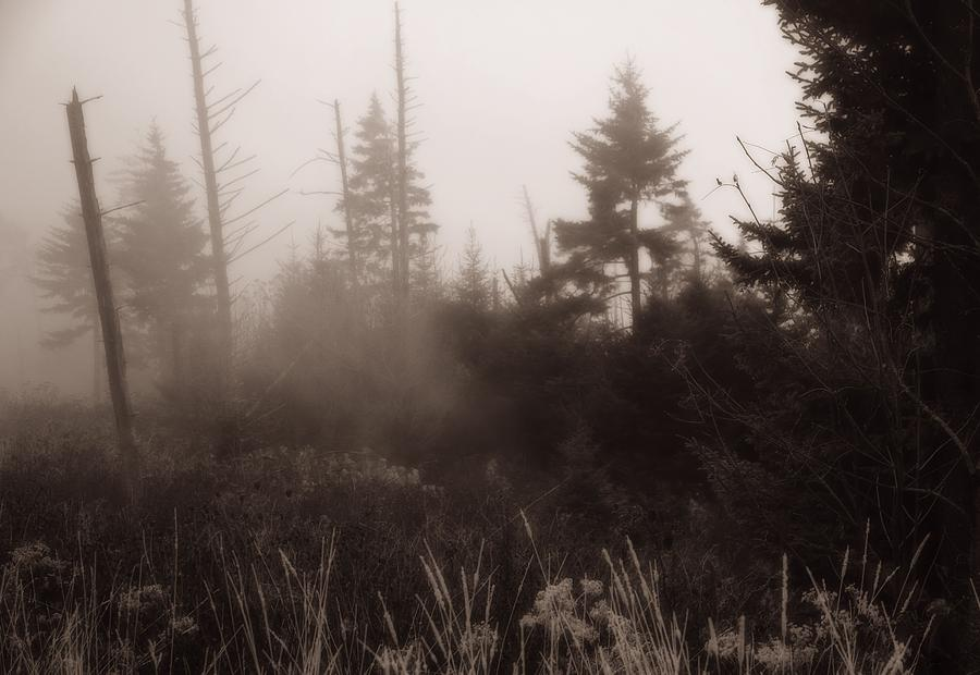 Morning Fog Photograph - Morning Fog In The Smoky Mountains by Dan Sproul