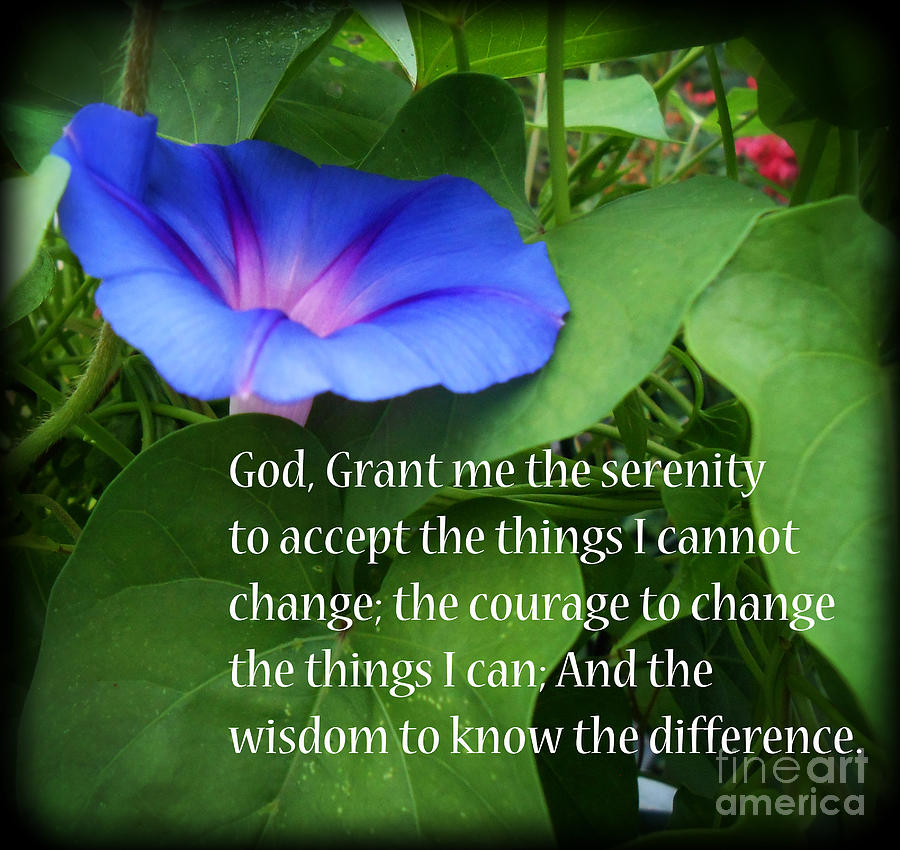 Botanical Photograph - Morning Glory Serenity Prayer by Eva Thomas