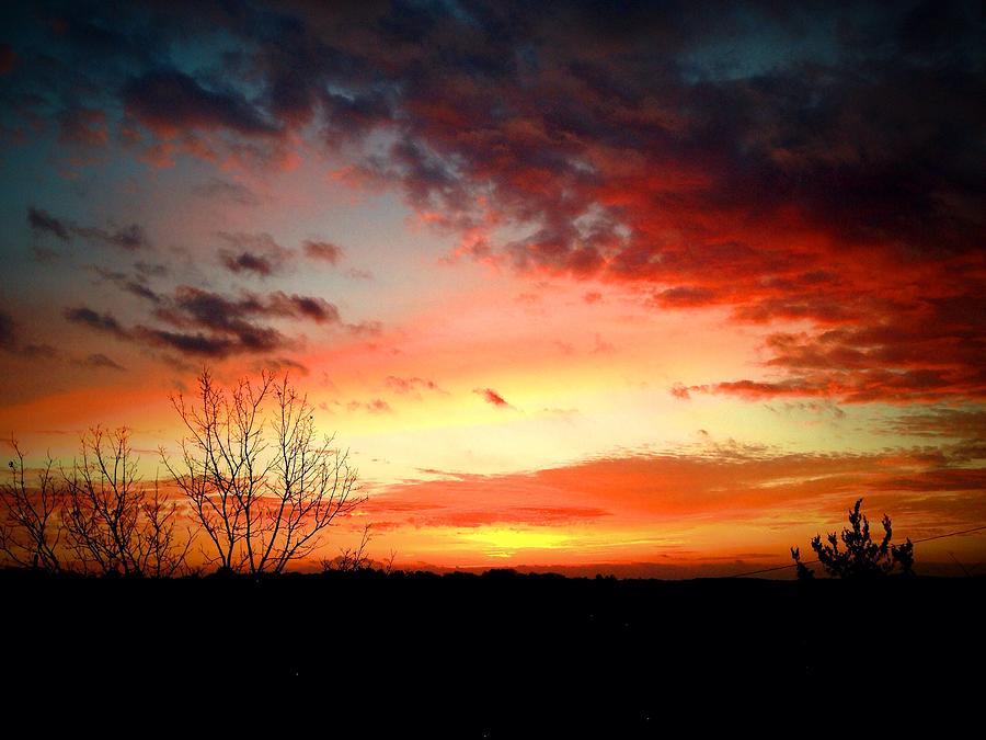 Morning Glory by Terry Zeyen