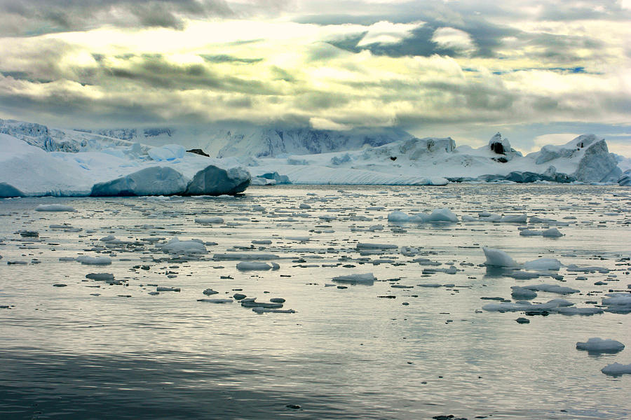 Icebergs Photograph - Morning Ice Flow by Amanda Stadther