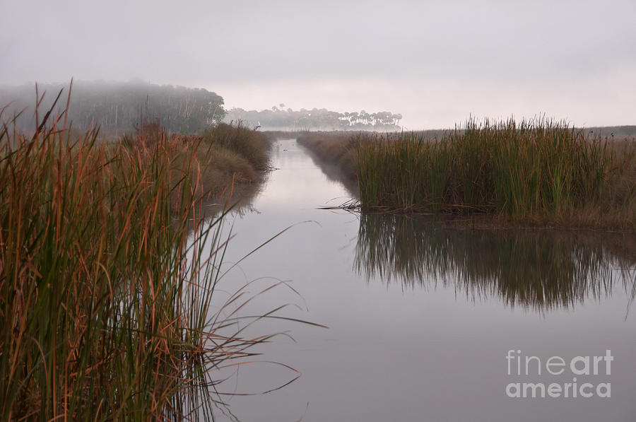 Foggy Photograph - Morning in The Marsh by Roy Thoman
