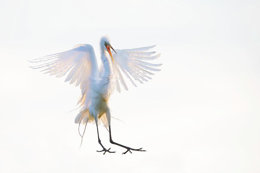 Bird Photograph - Morning Landing by Phillip Chang