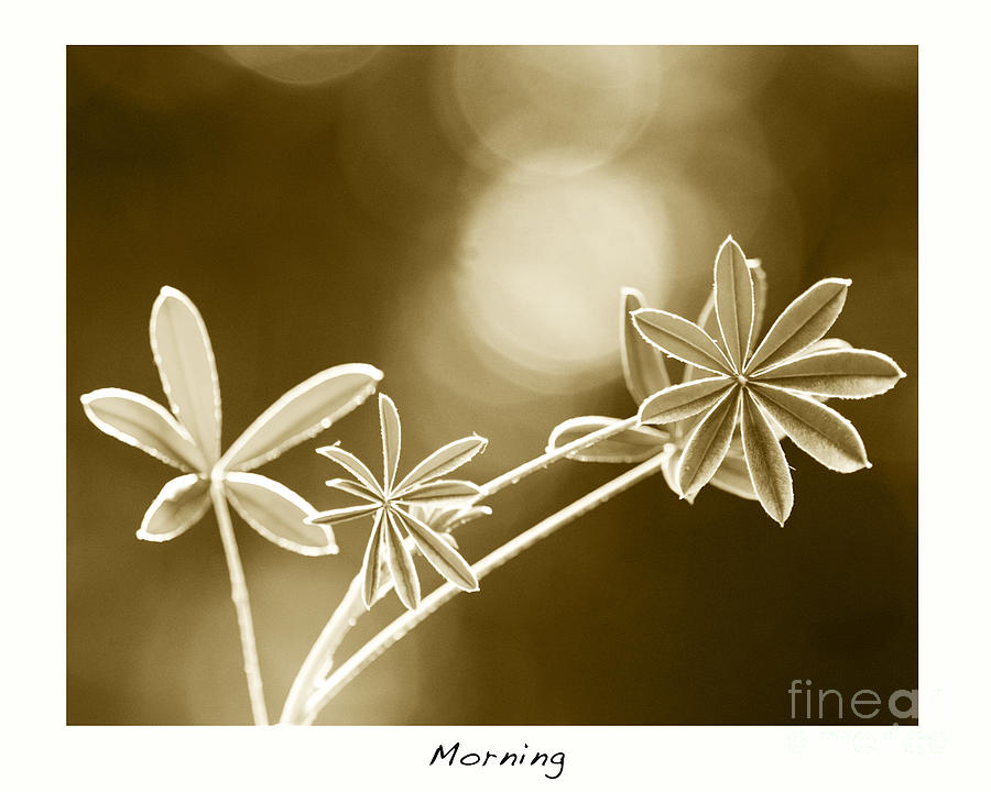 Best Sellers Photograph - Morning by Artist and Photographer Laura Wrede