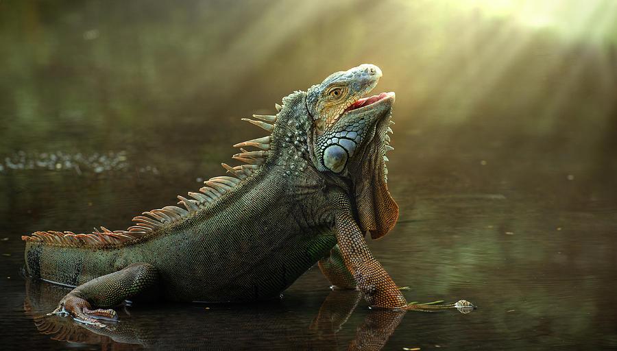 Lizard Photograph - Morning Light by Fahmi Bhs