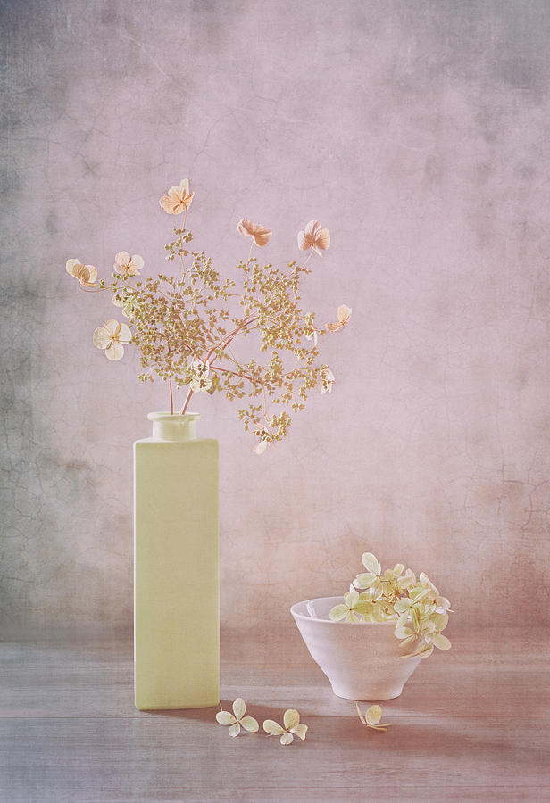 Still Life Photograph - Morning Light by Sophie Pan