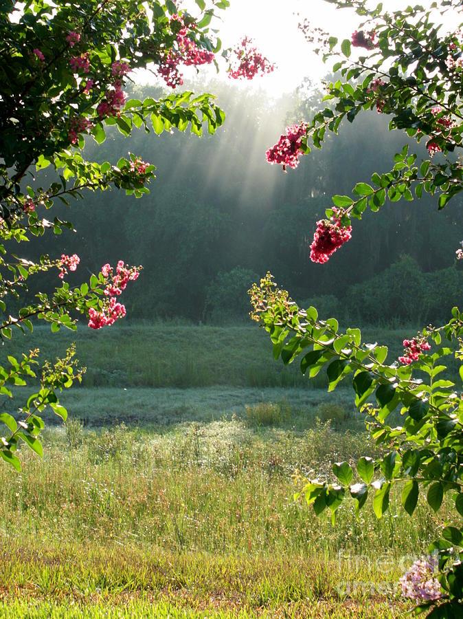 Crape Myrtle Photograph - Morning Marsh by Carol Groenen