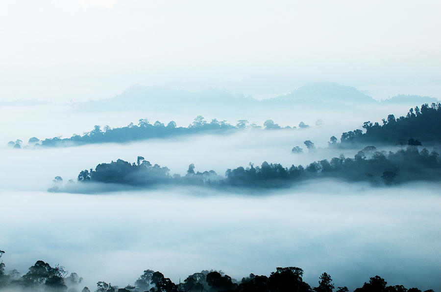 Morning Mist Over Rainforest Photograph by Anders Blomqvist