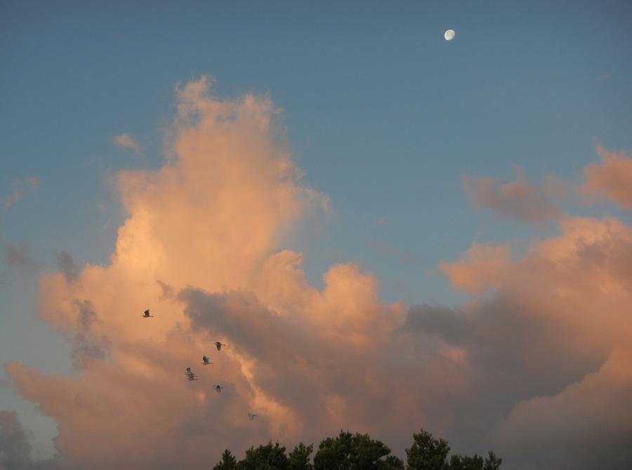 Moon Photograph - Morning Moon by Susan Sidorski