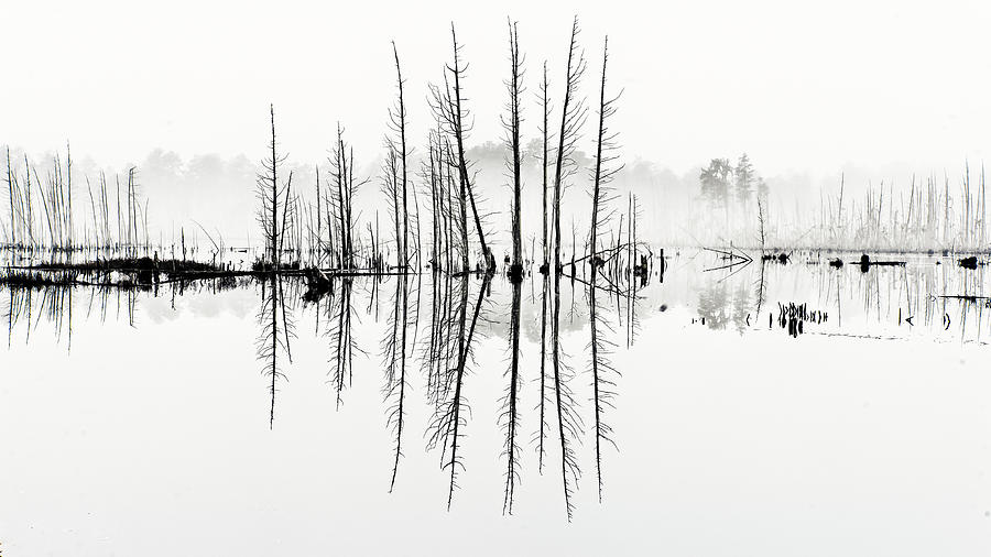 Cedar Photograph - Morning Mystery by Louis Dallara