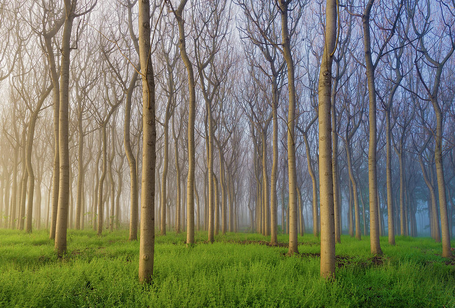 Landscape Photograph - Morning Of The Forest by Andy Chan